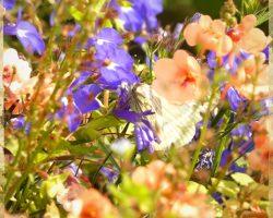 Blumen im Garten Seminarhaus Klyngenberg - Impressionen