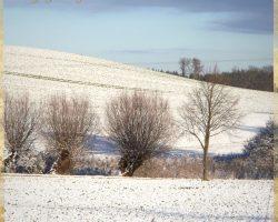 Mecklenburger Schweiz im Winter 1 - Impressionen