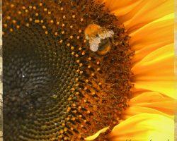 Sonnenblume Seminarhaus Mecklenburg Harmonische Steuerung - Impressionen