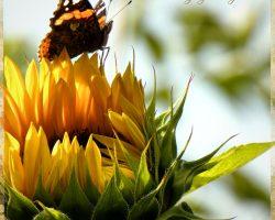 Sonnenblume Seminarhaus - Impressionen